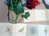 pines-process-4